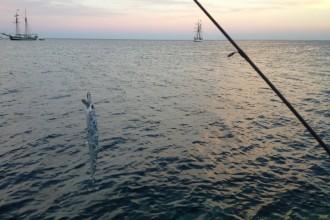spinning marino