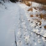 Neve verso il fiume... Pesca in Adige