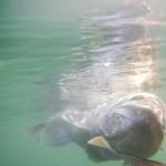 Luccio Perca in acqua