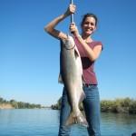 Salmon 13.3lbs