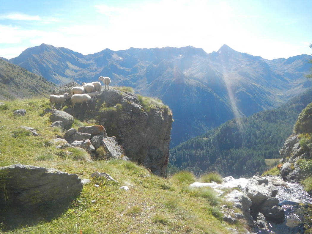 pascoli in montagna