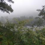 Paesaggi del Sesia