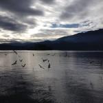 Gabbiani al tramonto sul lago