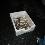 Il pescato... le mormore del mar di marmara