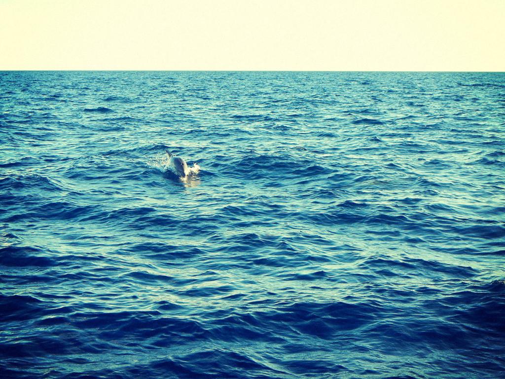Delfini in Madagascar