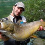 marmorata_trota_record_sesia_pietro_invernizzi_big_marble trout