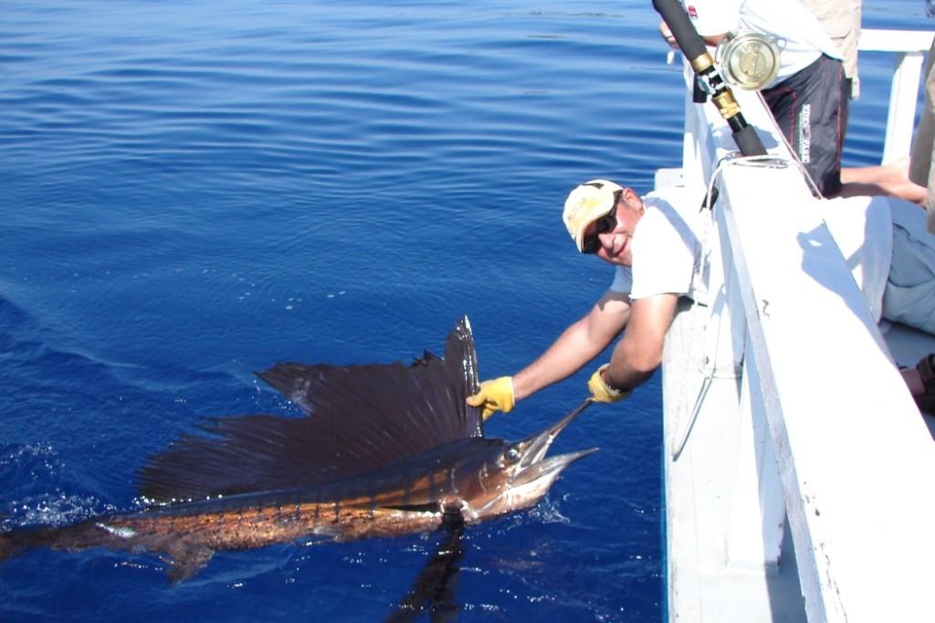 Pesce Vela Maldive