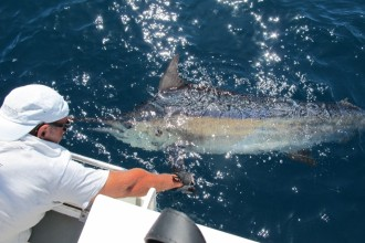 release black marlin