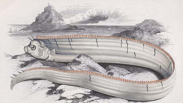 Pesce remo, mostro marino - presa da google immagini