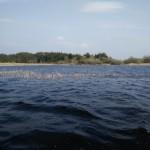 Il lago e l'habitat del luccio