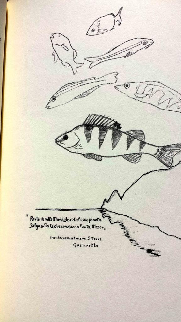 Illustrazione del persico su Bestiario della pesca con canna in acque dolci