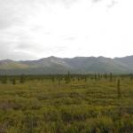 Paesaggio in Alaska