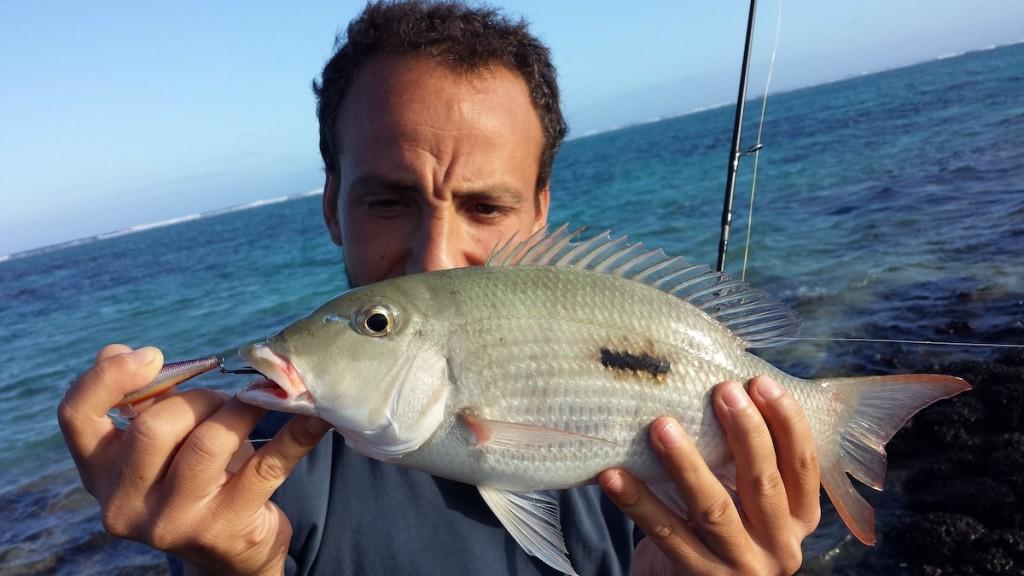 Piccolo carangide preso a Mauritius