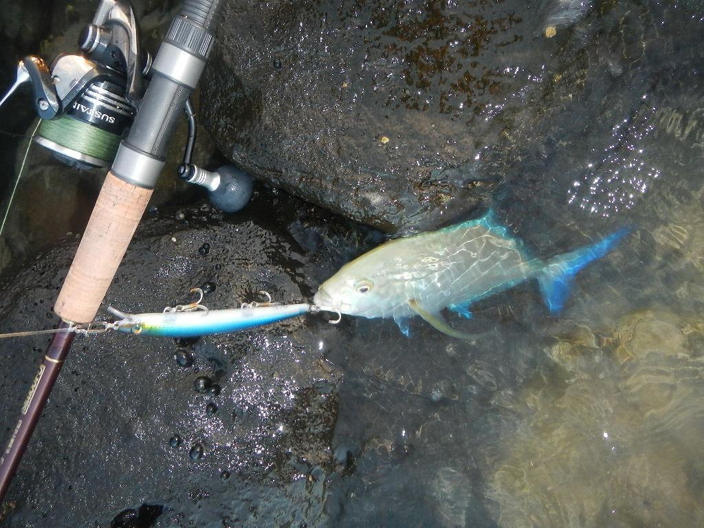 Uno dei piccoli Bluefin presi da riva