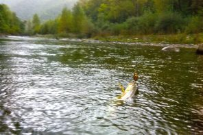 Itinerario Alto Trebbia: pesca a mosca e spinning alla trota