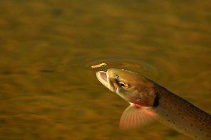 Il pescatore di tempo