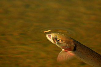 Foto presa da www.brianpricephoto.com