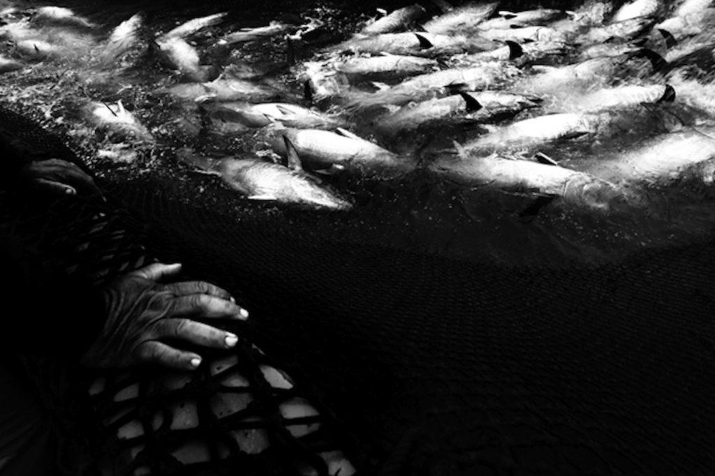 Foto di mattanza spagnola, di Antonio Ganzalez Caro da notey.com