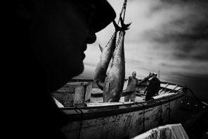Pesca ed industria del tonno, continuare la mattanza! Una rivoluzione di latta.