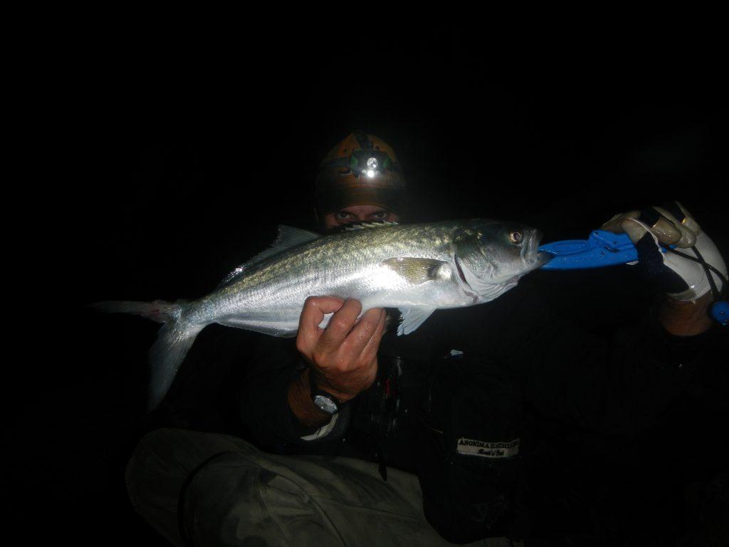 Pesce Serra a spinning C&R