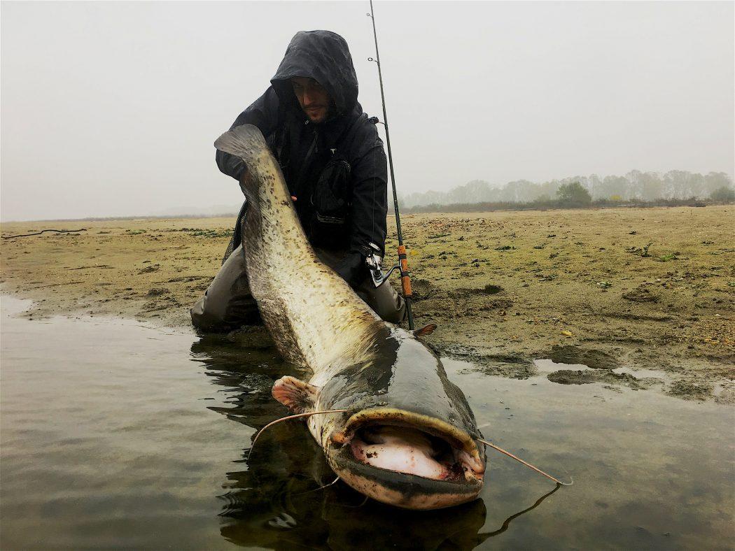 siluro record big catfish glano pietro invernizzi po