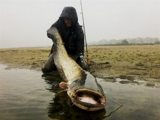 siluro record big catfish glano pietro invernizzi po