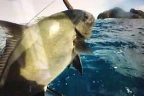 Pesca a spinning a Madeira