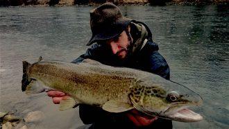Trota Marmorata in Adige record big trout Pietro Invernizzi