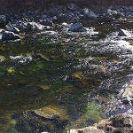 I disegni dell'acqua. Bellezza del torrente.