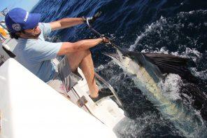 Pesce vela a spinning. Il più bello, il più veloce