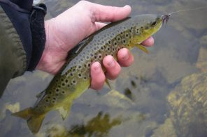 "Dal blog di pesca ""sexyloops.com"" - Thanks!"