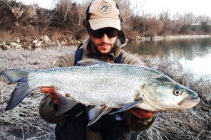 Pescare per la capitale.  Aspi, perca e divinità ostili