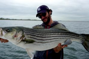 Striped Bass.  A New York top water story