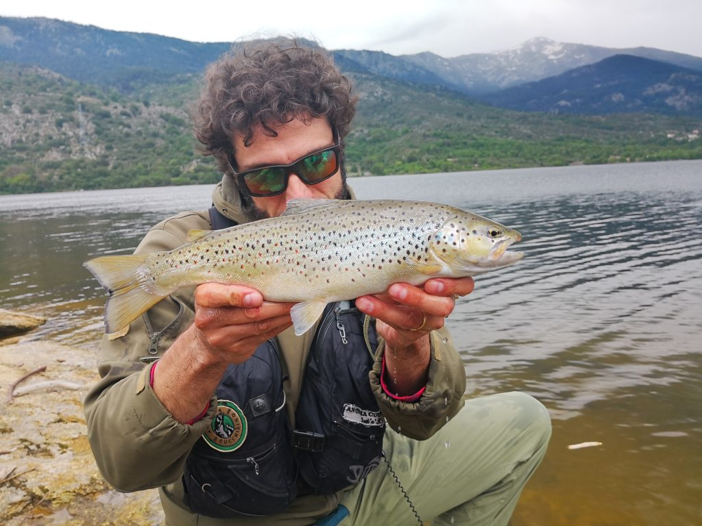 Trota fario in lago, cathc and release