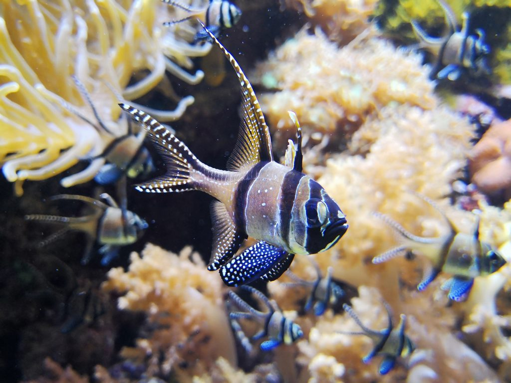 Un pesce dall'acquario di Genovaa