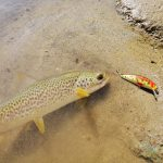 Piccolo pesce bellissimo per piccola esca bellissima