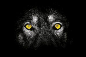 """""""La regola del lupo"""": omicidio sul Lago di Como"""