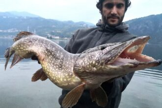 Luccio a swimbait, pike on swimbait, Pietro Invernizzi