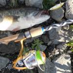 Catture AP Lures Black Bass