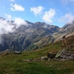 cartolina di montagna