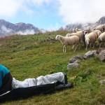 Pecore minacciose....