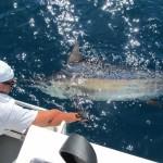 release black marlin