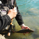 patagonia fly fishing catch and release