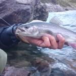 Salmerino e Real Deal Urban Fishing