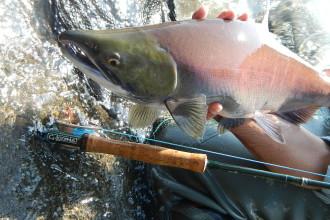 Red Salmon & Gloomis Nrx 10 #8