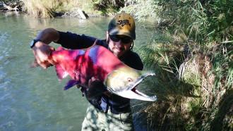 Big Red Salmon, Sockeye, Pietro Invernizzi