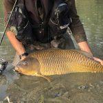 Pietro Invernizzi Carpa record big carp release