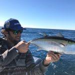 black tuna