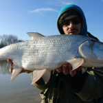 Urban Fishing Lures colpisce Aspio!