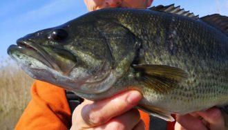 black bass fishing